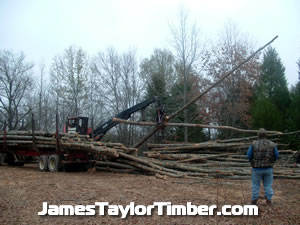 double log grab texas timber jacks