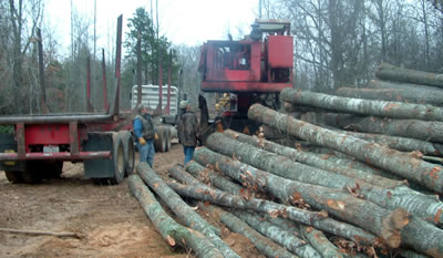 land owners timber sales terms logging dictionary