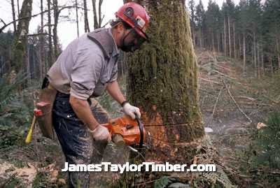 timber cutting tree cutter east texas